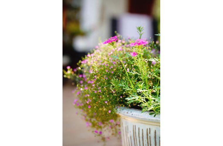 Majatalo Puukarin Pysäkki kukkia